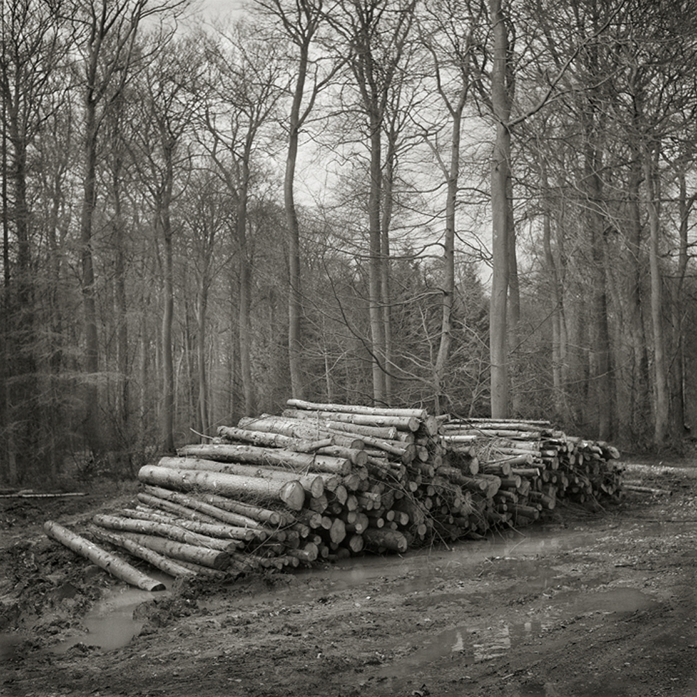 Wood Pile, from the Fieldwork series, 2006