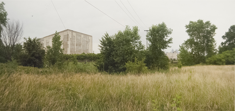 Prarie and Peregrine Falcons, Detroit, 2007