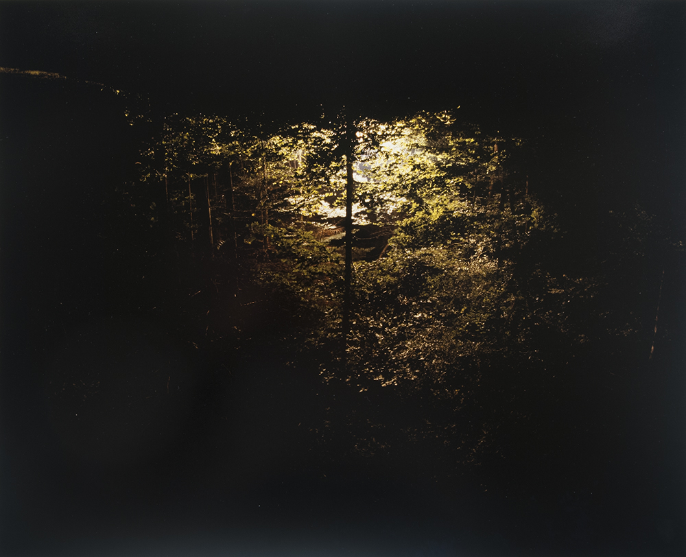 Untitled (plants at night), 2006
