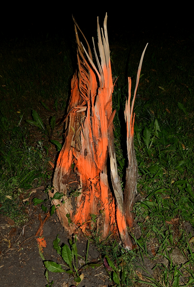 Untitled (painted tree stump), from Hide the Sun, 2014-2017