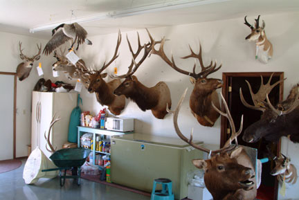 Taxidermy Shop, Casper, Wyoming, 2004