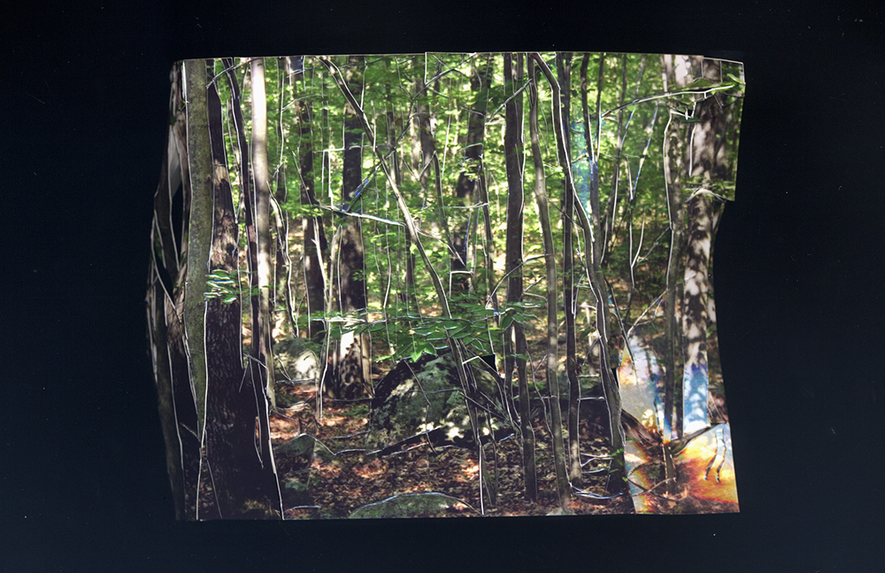 Inside Out Picture of a Forest, no. 17, 2013