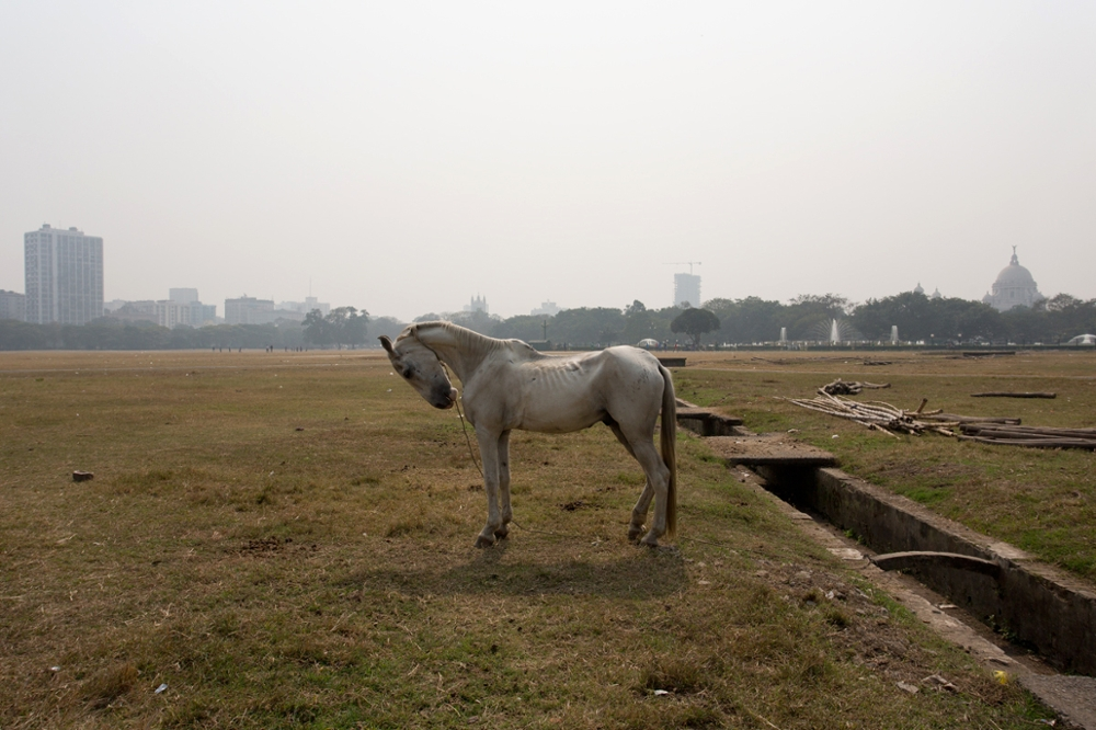 Horse, the Maidan, Calcutta, 2013