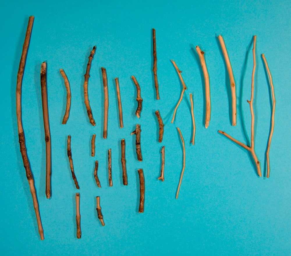 Debarded Sticks (Substitutionary Atonement for the Neighbor's Dogs), 2012