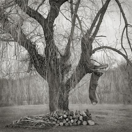 Broken Tree, from the Fieldwork series, 2006