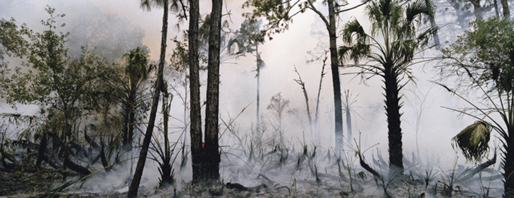 Fire in the Swamp #1, 2007