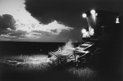 Harvesting, Hazelton, North Dakota