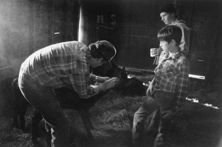 Joe Shea, Mending a Calf, Hazelton, North Dakota