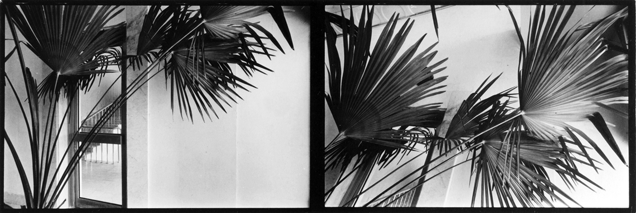 Untitled (palm plant diptych)