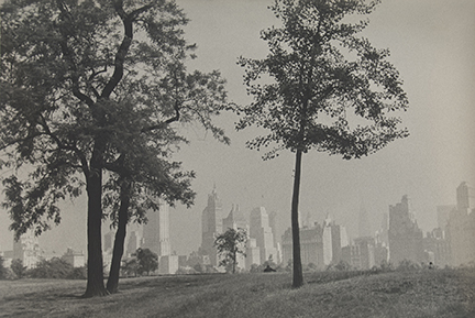 Trees and New York City Skyline, Central Park