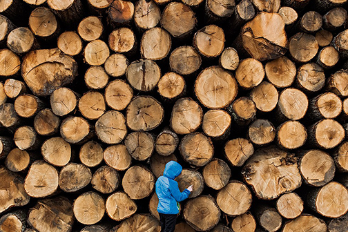 Lumberjack, from the