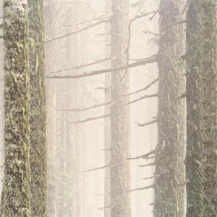 Mountain Firs and Fog, Oregon, from The Great Northwest Portfolio