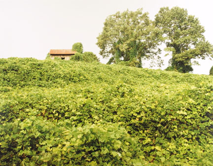 Kudzu and House, Tuscaloosa County, AL