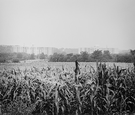 Cornfields with Two Apartment Buildings, from Changing Chicago