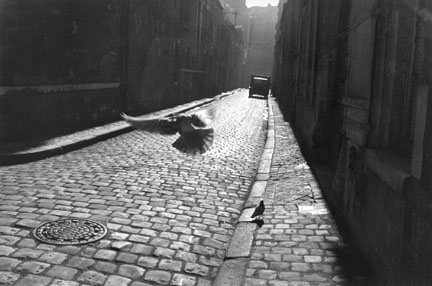 Pigeon in Cobbled Street, Orleans