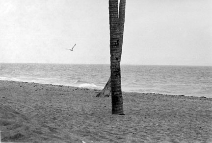 Seagull and Crossed Trees, Florida