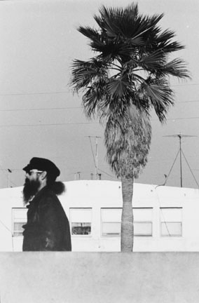 Bearded Man with Tree, Venice, USA