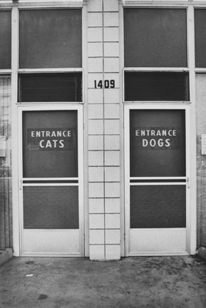 Cats and Dogs, Alabama, USA