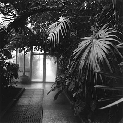 Glasshouse, Jardin Botanico, Madrid