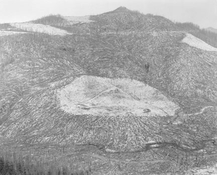 Area Clearant Prior to 1980 Eruption Surrounded by Downed Trees, Clearwater