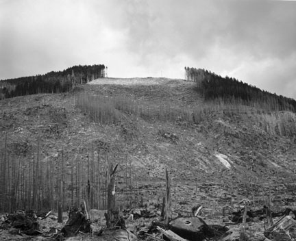Timber Salvage on Ridge at Eastern Unit of Blast Zone, Clearwater Creek Valley, 9.5 Miles East of Mt. St. Hellens