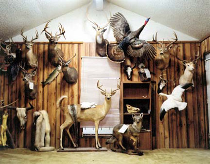 Taxidermy Showroom