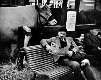 Paris (cow stalls and man reading newspaper on bench)