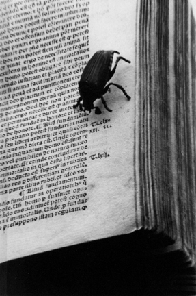 New York (bug and book)