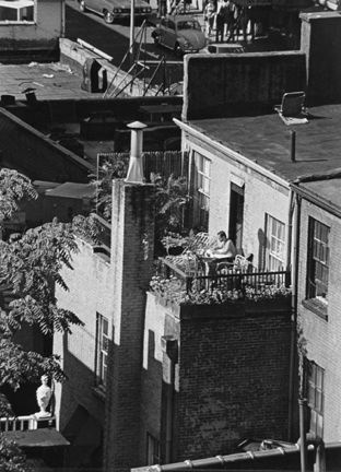New York (man reading on roof garden)