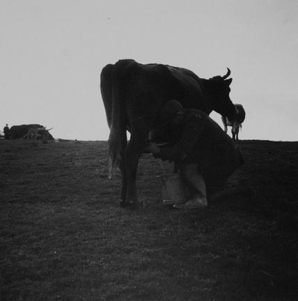 Man Milking Cow, Ireland