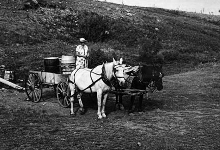 Mrs. Olie Thompson ready to drive home from the spring with barrels full of water.  Williams County, North Dakota