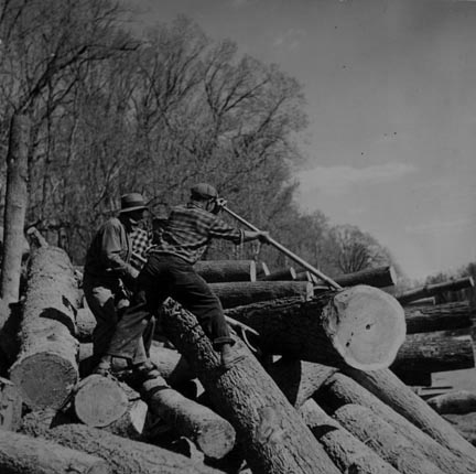 Lumberjacks using peaveys to remove logs from banks of Little Fork River. Near Littlefork, Minnesota