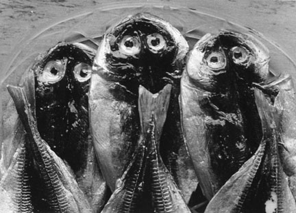 Three Fish, Yugawara, Japan, from the