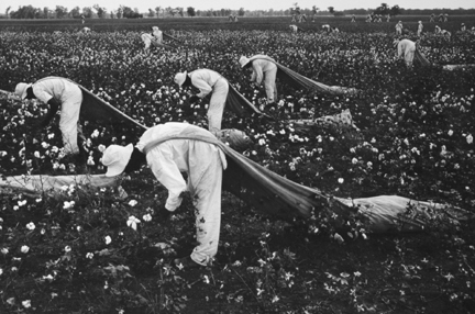 Cotton pickers, from the portfolio