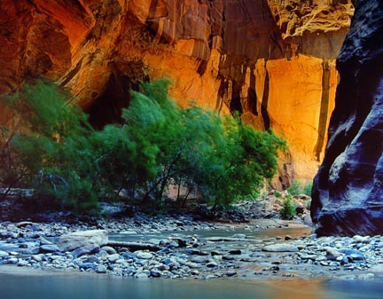 Zion Narrow #1