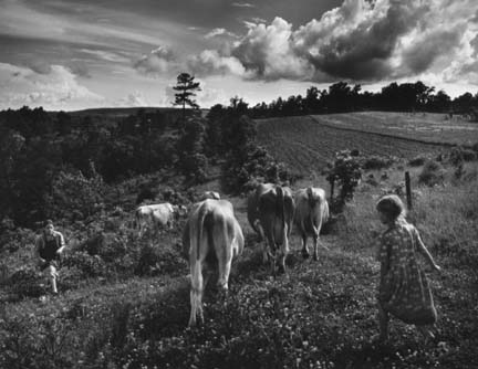Bringing in Cows, from the Ozark portfolio