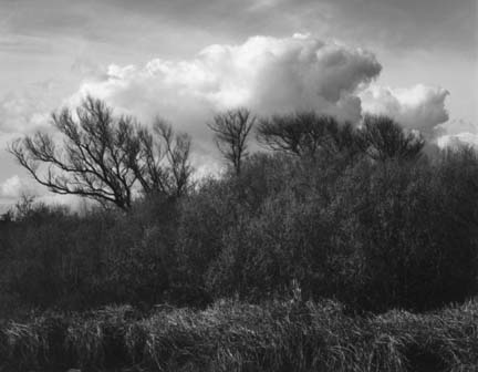 Willow and Clouds, from the Delta portfolio