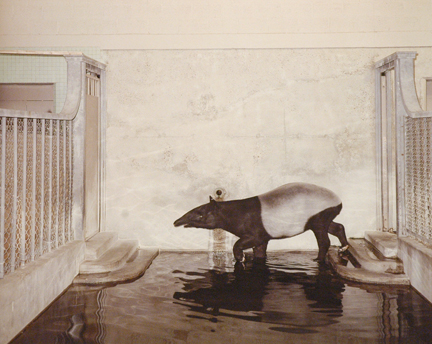 Tapir, Cleveland, from the