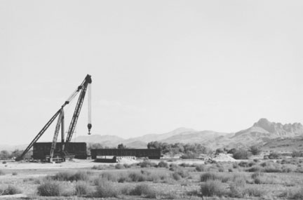 Crane in Desert Near Tucson, Arizona