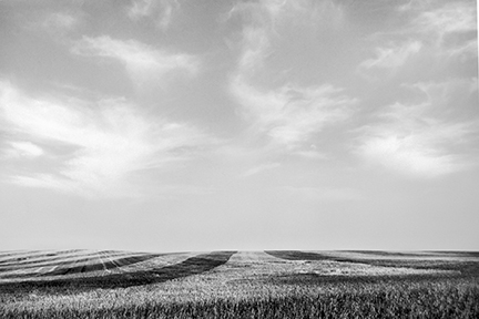 Harvested Wheat, Ghylin County, North Dakota
