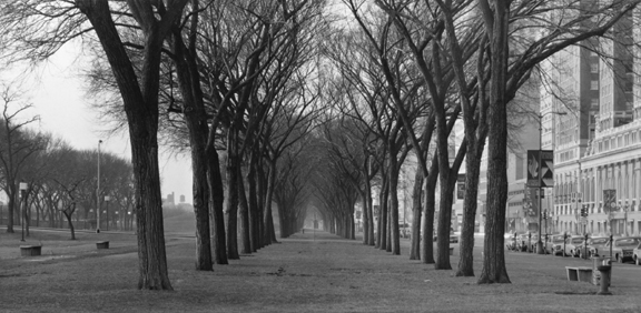 Grant Park #5, From