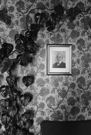 Climbing Plant and Portrait, Assisi, From