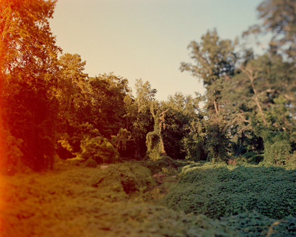Kudzu covered landscape, from the