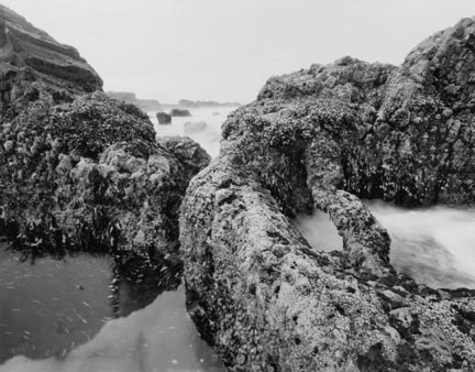 Invasive Basalt, Seal Rocks State Park, Oregon, from The Great Northwest Portfolio