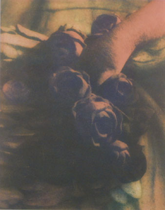 Untitled (Hand with Roses)