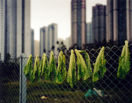 Drying Salad Leaves, Hong Kong